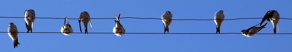 birds-1024x768